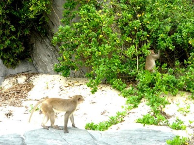 Monkey islands