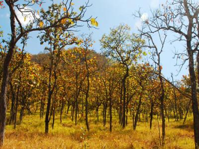 Yok Don National Park in Buon Me Thuot