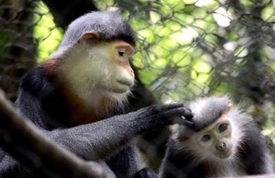 Cuc Phuong Primate Rescue Centre