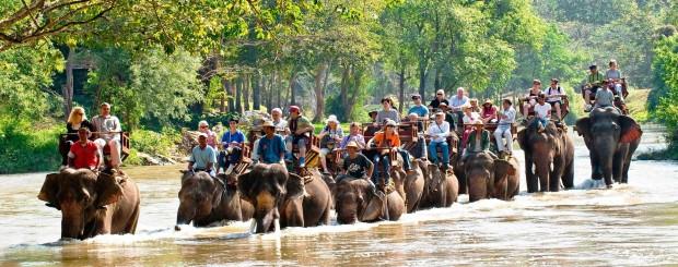 elephant safari - thailand tour